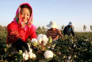 china-cotton-2012