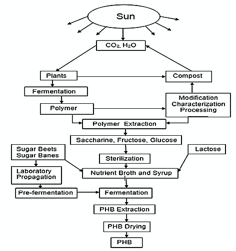Figure 5: PHB extraction and synthesis process flowchart from plants (Adapted from [12])