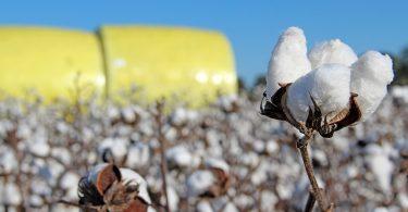 us-cotton