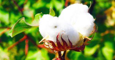 cheap-alternatives-to-cotton