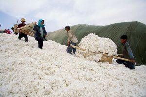 china-cotton-56