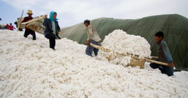 china-cotton-56