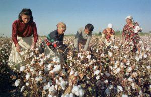 uzbekistan-cotton