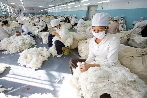 china-cotton